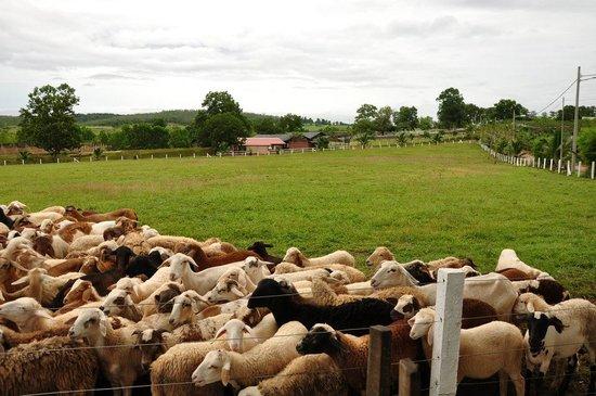 UK Farm Resort 1