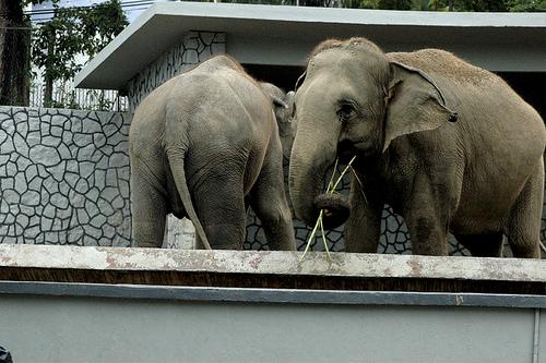 Zoo Negeri Johor 2