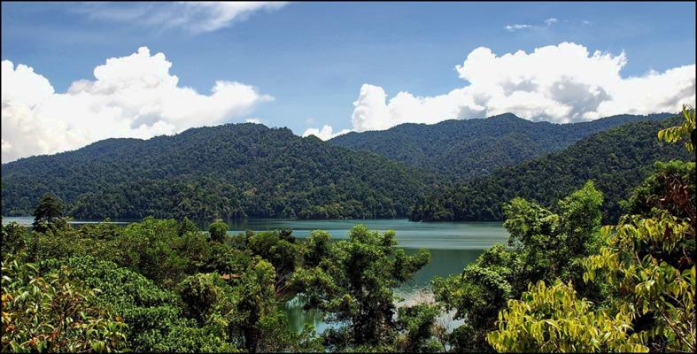 Belum Forest Reserve. 1