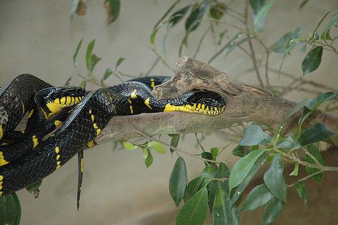 snake and reptile farm perlis 1