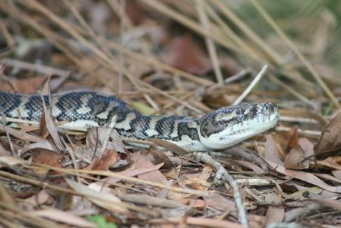 snake and reptile farm perlis 5