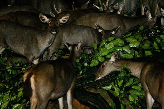 Taiping Zoo and Night Safari 3