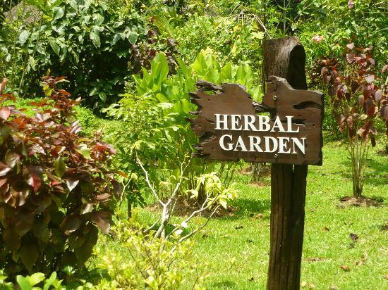 Perak Herb Garden 1