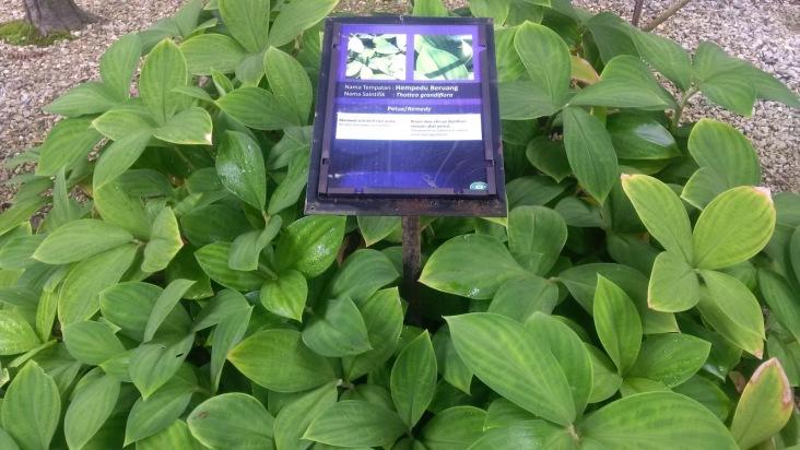 Perak Herb Garden 2