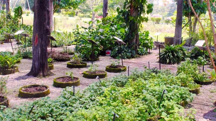 Perak Herb Garden