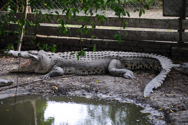 Miri Crocodile Farm 2